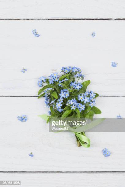 bunch of forget-me-not on white ground - 繊細 ストックフォトと画像
