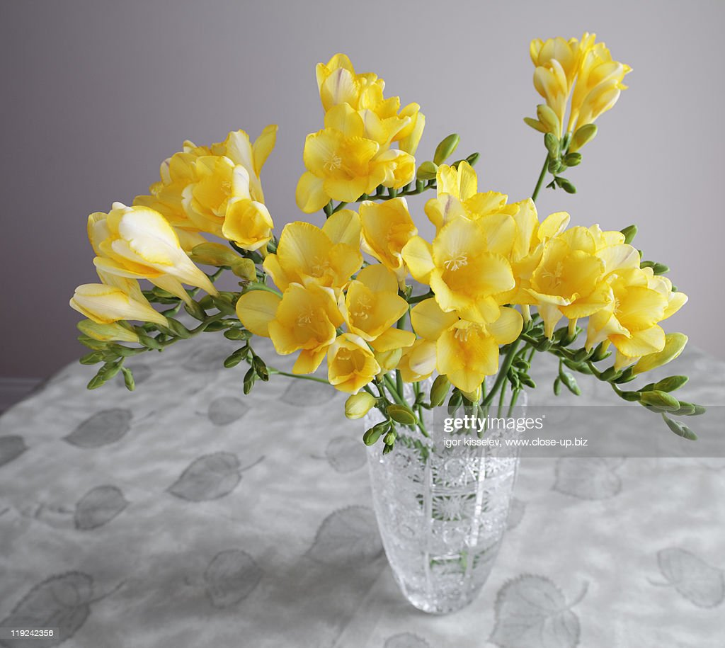 Bunch of freesias in crystal vase : Stock Photo