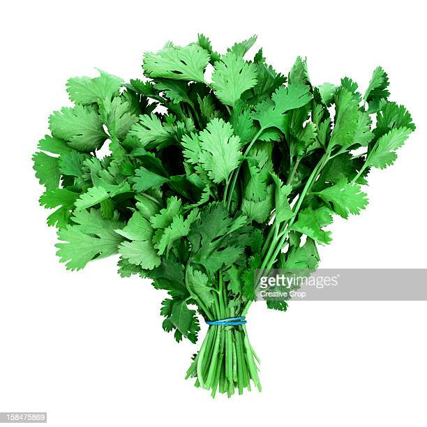 Bunch of fresh coriander, on white background