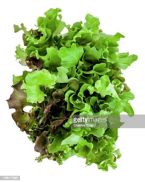 Bunch of fresh lettuce leaves