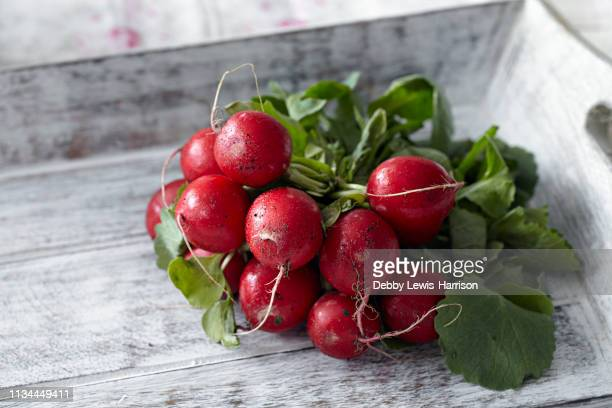 bunch of fresh radishes - cultivated stock pictures, royalty-free photos & images