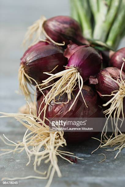 Bunch of fresh red onions