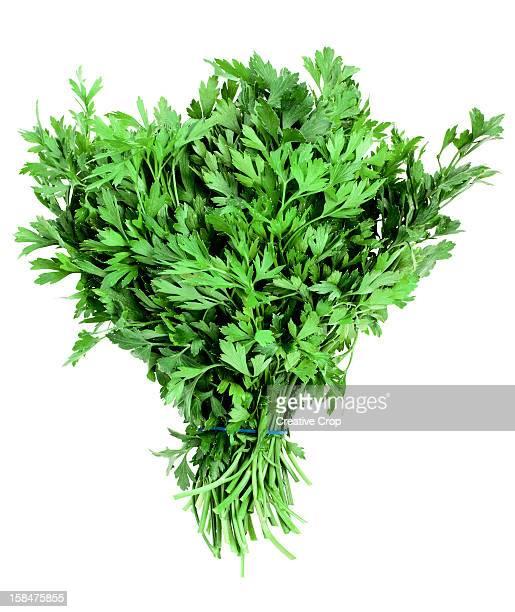 Bunch of freshly cut flat leaf parsley