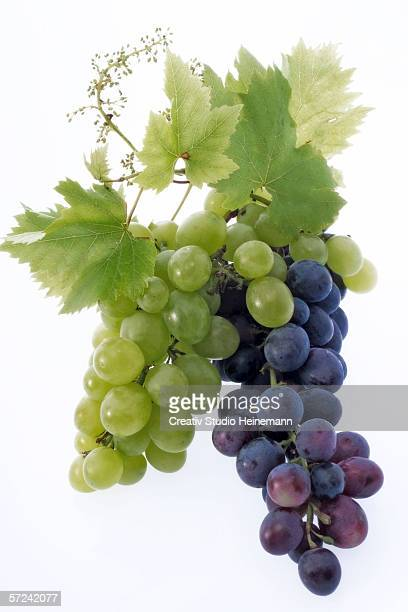 bunch of grapes, close-up - white grape stock photos and pictures