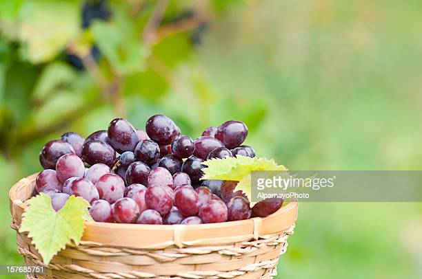 bunch of grapes in the basket with vine background (iii) - quebec stock pictures, royalty-free photos & images