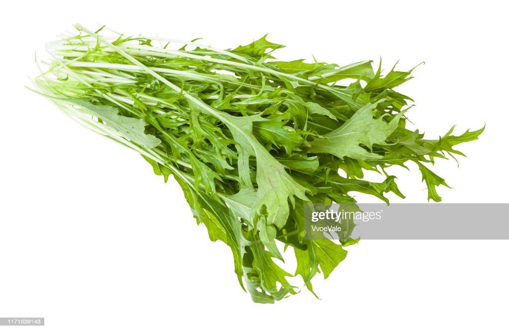 bunch of green mizuna (Japanese mustard greens) : Stock Photo