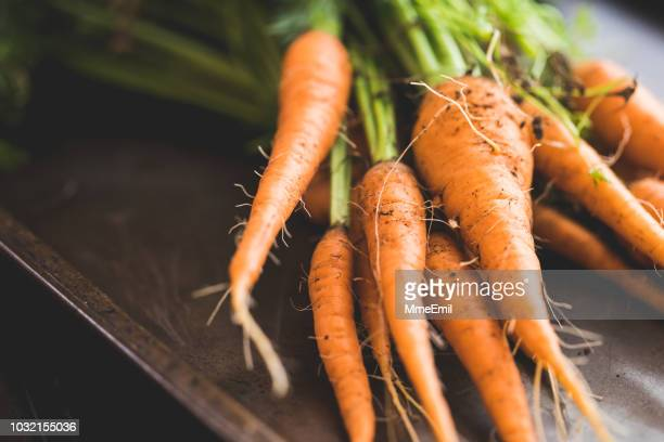 bunch of homegrown organic carrots - freshness stock pictures, royalty-free photos & images
