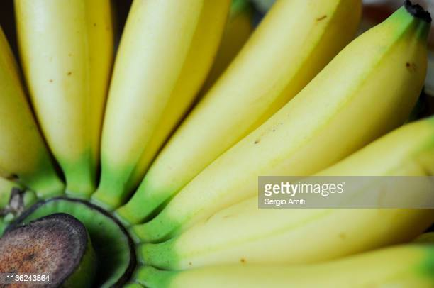 Bunch of lady finger bananas