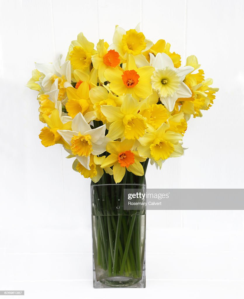 Bunch of mixed daffodils from English garden. : ストックフォト