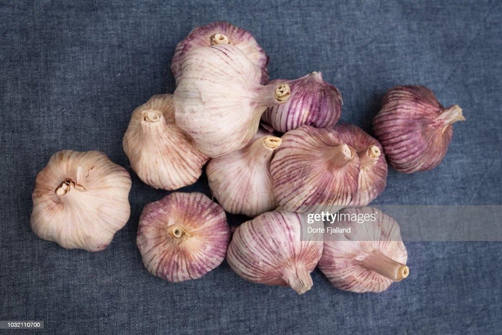 Bunch of purple garlic on a blue table cloth : Foto de stock