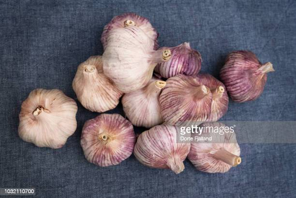 Bunch of purple garlic on a blue table cloth