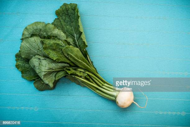 A bunch of raw white Japanese Hakurei turnips from the farmer's market pictured against a blue background