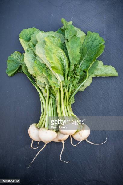 A bunch of raw white Japanese Hakurei turnips from the farmer's market pictured against a slate background
