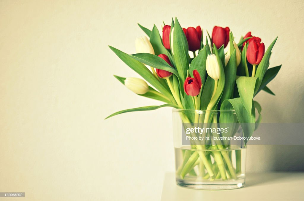 Bunch Of Red And White Dutch Tulips In Glass Vase Stock Photo