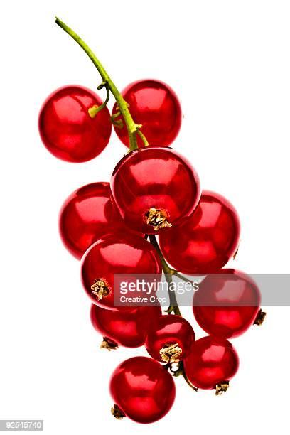 bunch of red currants - johannisbeere stock-fotos und bilder