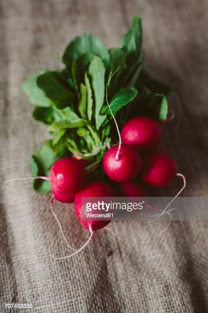 Bunch of red radishes on cloth
