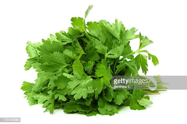 bunch of ripe parsley - parsley stock pictures, royalty-free photos & images