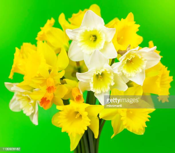 Bunch Of Daffodils Stock Pictures Royalty Free Photos Images