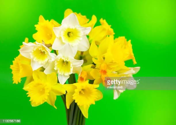 bunch of spring flowers, daffodils - mazzi fiori di campo foto e immagini stock