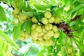bunch fresh star gooseberries with stem