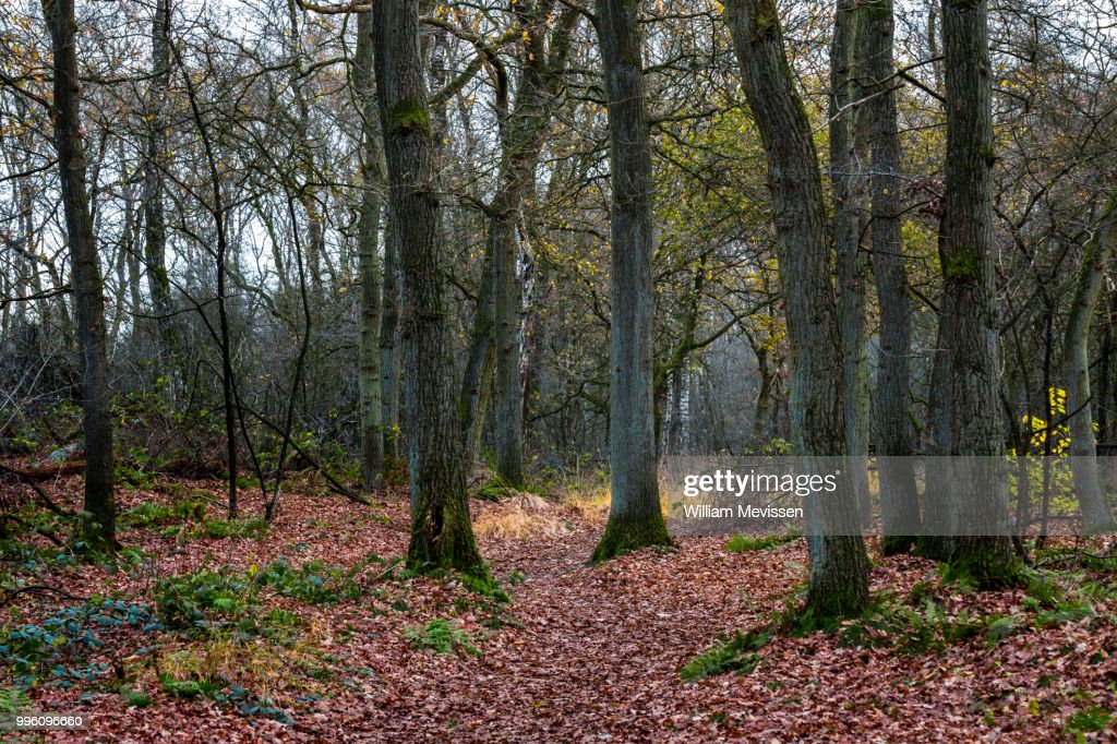 A Bunch Of Trees : Stockfoto
