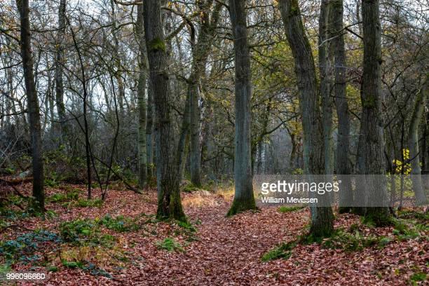 a bunch of trees - william mevissen fotografías e imágenes de stock