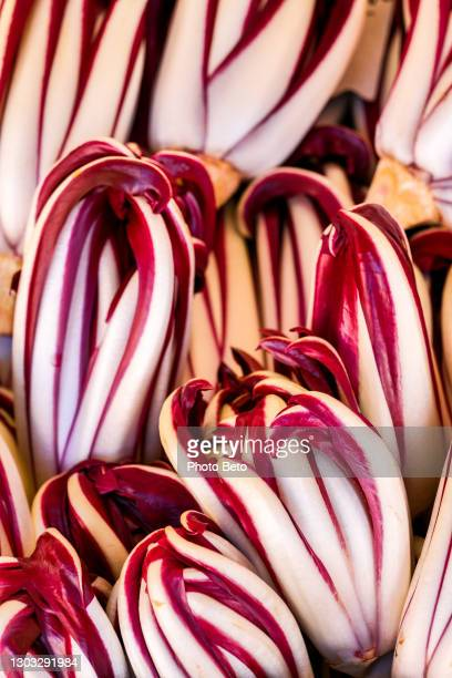 a bunch of treviso radicchio - treviso italy stock pictures, royalty-free photos & images
