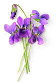 Bunch of Violets