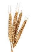 Bunch of wheat ears isolated on white