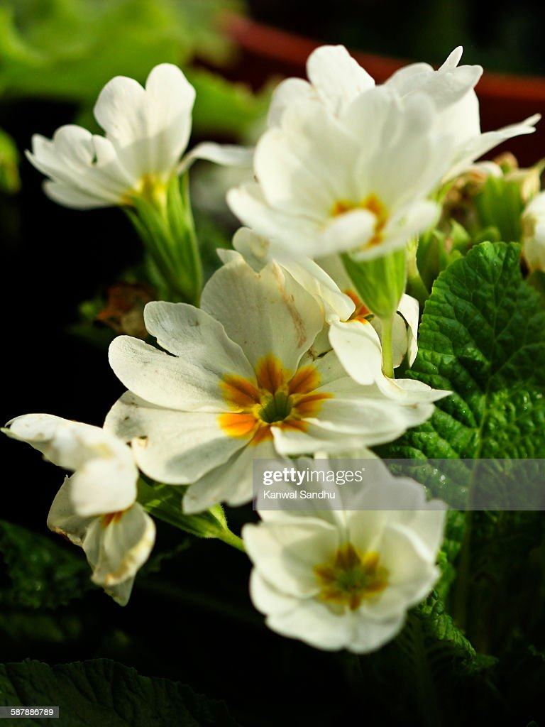 Bunch Of White Flowers With Green Background Stock Photo Getty Images