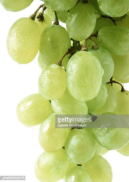 bunch of white grapes, close-up, white background - white grape stock photos and pictures