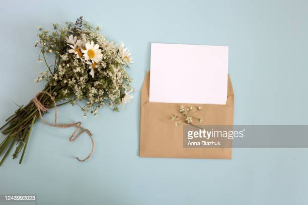 bunch of white wild flowers and daisies and envelope with blank paper over pastel blue background. vintage summer picture with copy space - message stock pictures, royalty-free photos & images