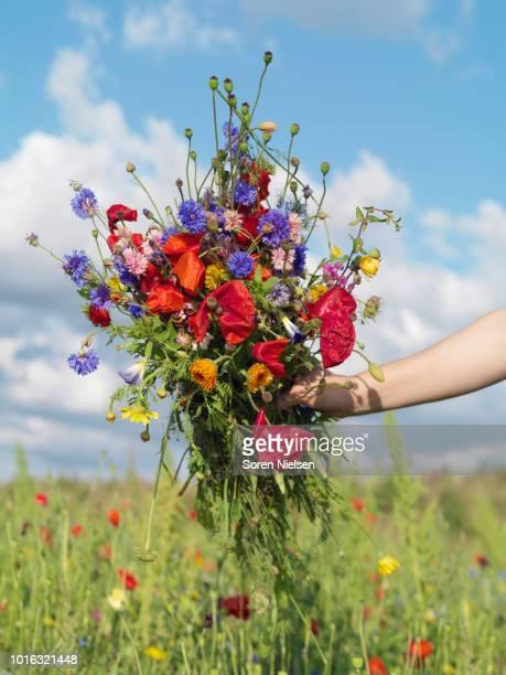 bunch of wildflower freshly picked from field - mazzi fiori di campo foto e immagini stock
