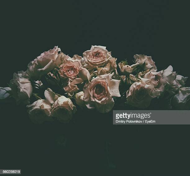 Bunch Of Wilted Roses