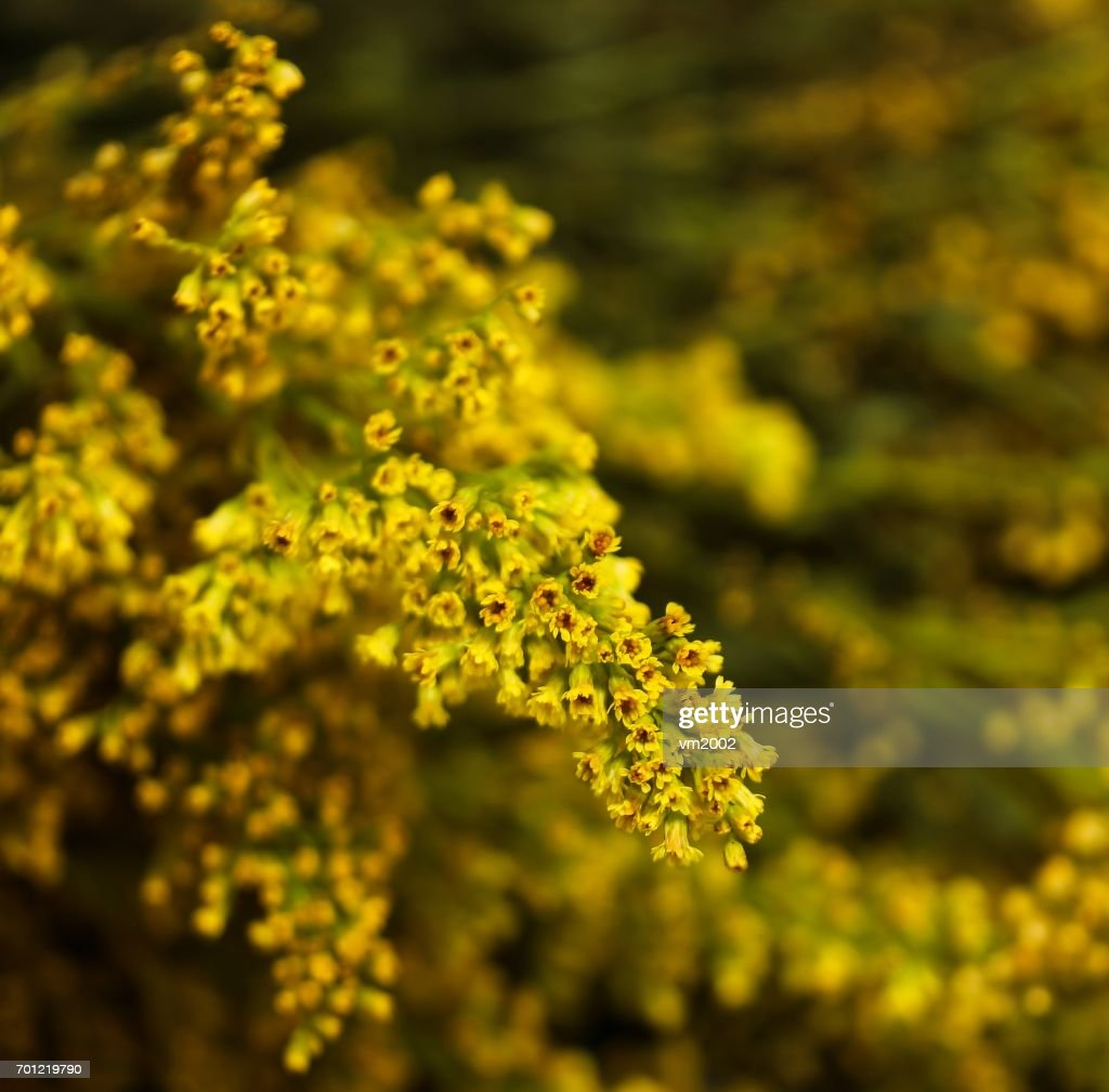 Bunch Of Yellow Flowers Background Spring Concept Soft Focus Stock