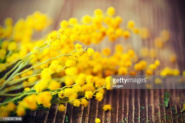 bunch of yellow mimosa on dark wooden table - march month stock pictures, royalty-free photos & images