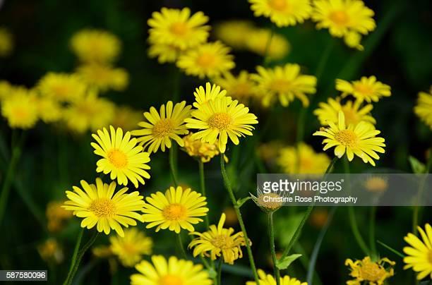 bunched up - mazzi fiori di campo foto e immagini stock