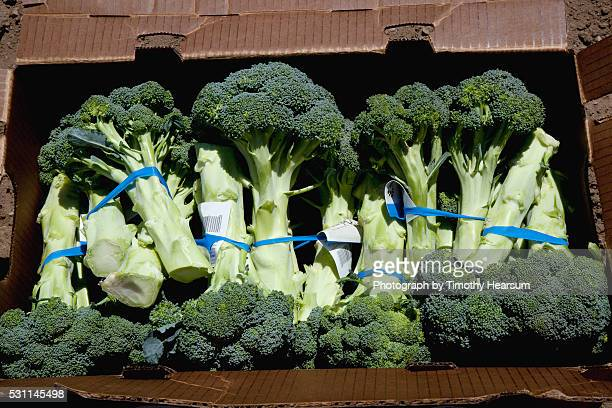 bunches of broccoli trimmed, labeled, boxed and ready for market - timothy hearsum stock-fotos und bilder