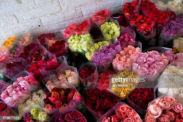 Bunches of colorful roses are seen at a flower farm in Cayambe Ecuador 29 June 2010 Ecuador is one of the world leaders in cut flower industry The...