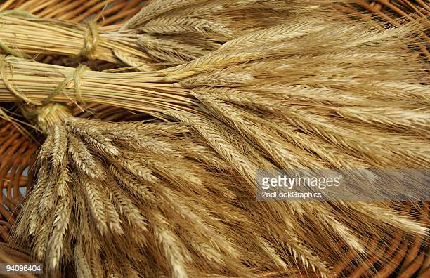 bunches of golden wheat in basket - rye grain stock pictures, royalty-free photos & images