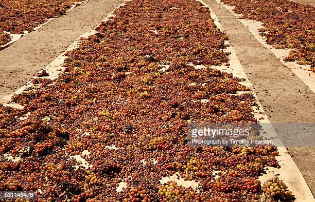 bunches of grapes spread on canvas for sun-drying into raisins - timothy hearsum stock pictures, royalty-free photos & images