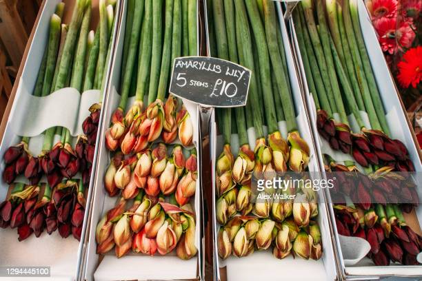 bunches of long stem colourful flowers in boxes at flower market - sign stock pictures, royalty-free photos & images