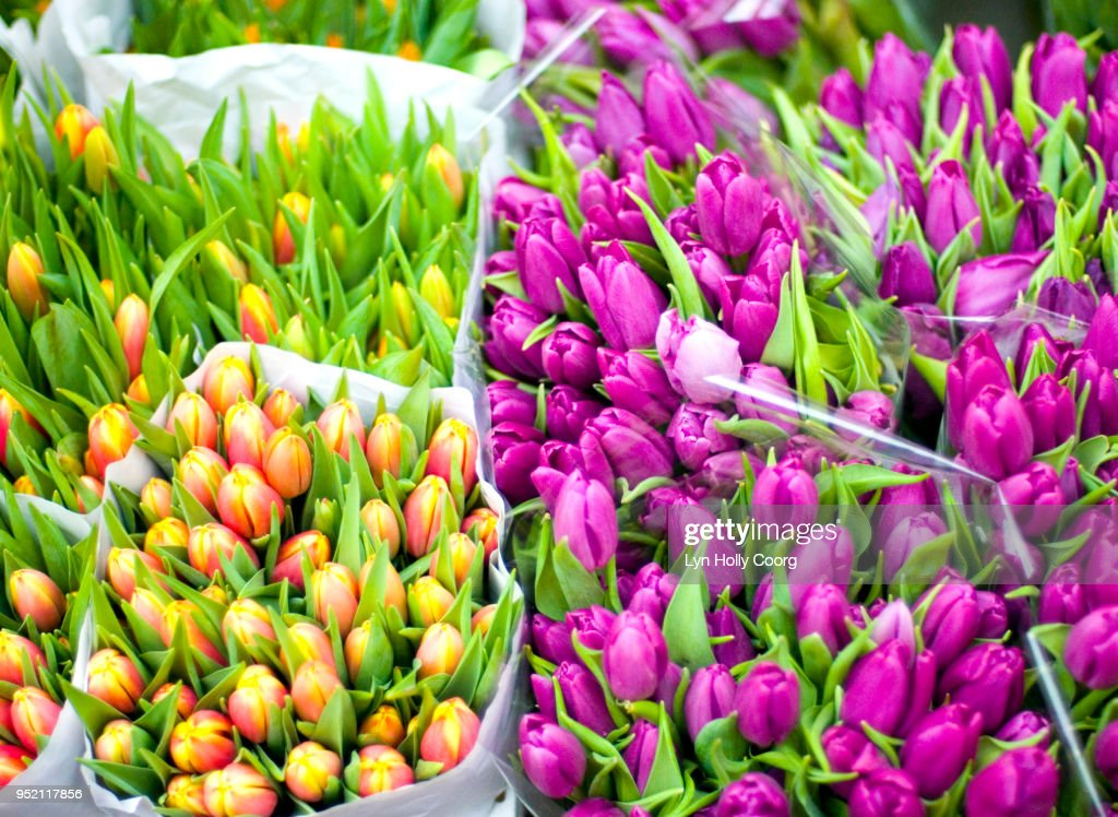 Bunches of pink and yellow tulips for sale : Stock Photo