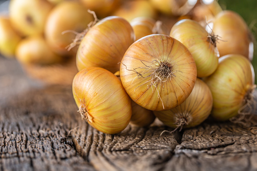 bundle of freely lying dried onion on a wooden table 1171700923