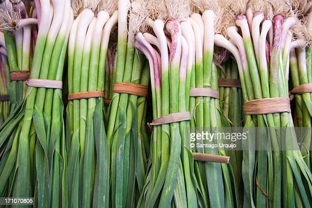 Bundles of fresh ecological scallions for sale