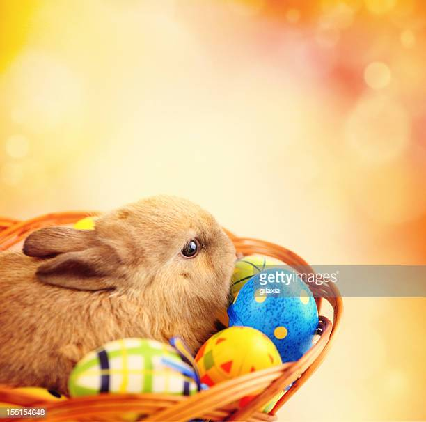 Bunny and Easter eggs.