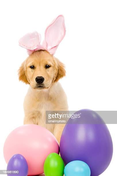 bunny ear puppy - dog easter stock pictures, royalty-free photos & images