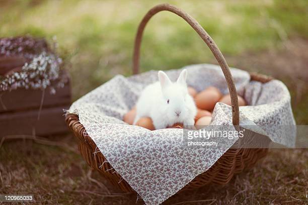 Bunny in easter basket