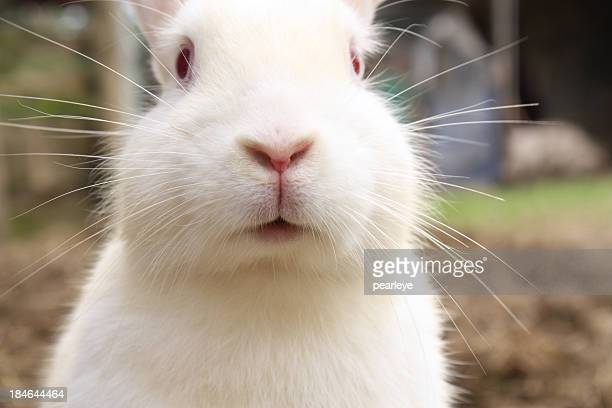 bunny - white rabbit stock pictures, royalty-free photos & images