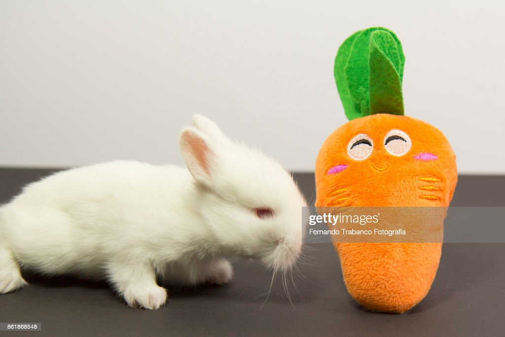 bunny plays with a carrot : ストックフォト